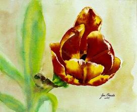 _dsc0562-tulip-master