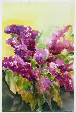 Lilacs_BM