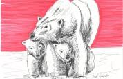 peaking baby bear
